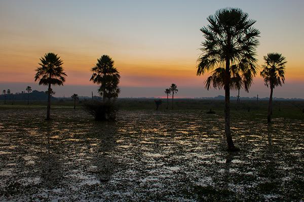 Bizarre landscapes in the Iberá Wetlands, Argentina