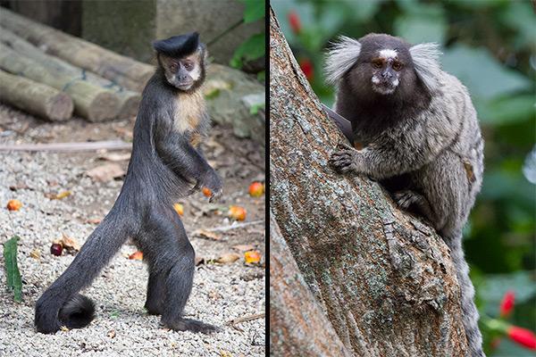 Wildlife in Rio de Janeiro, Brazil