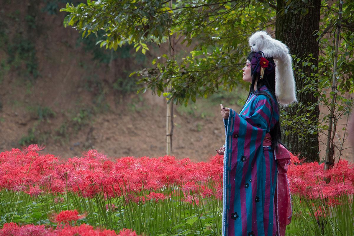 japan-spider-lilies-4