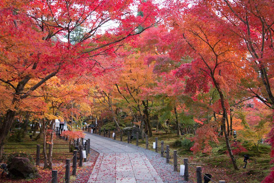 Autumn foliage in Kyoto's Eikando Temple