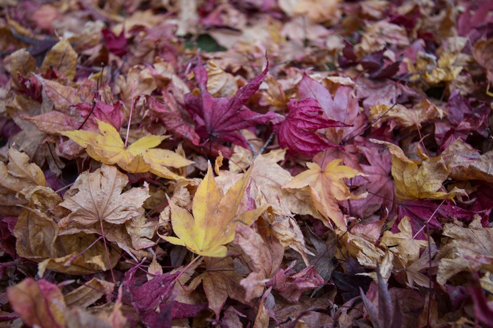 End of foliage season in Kyoto