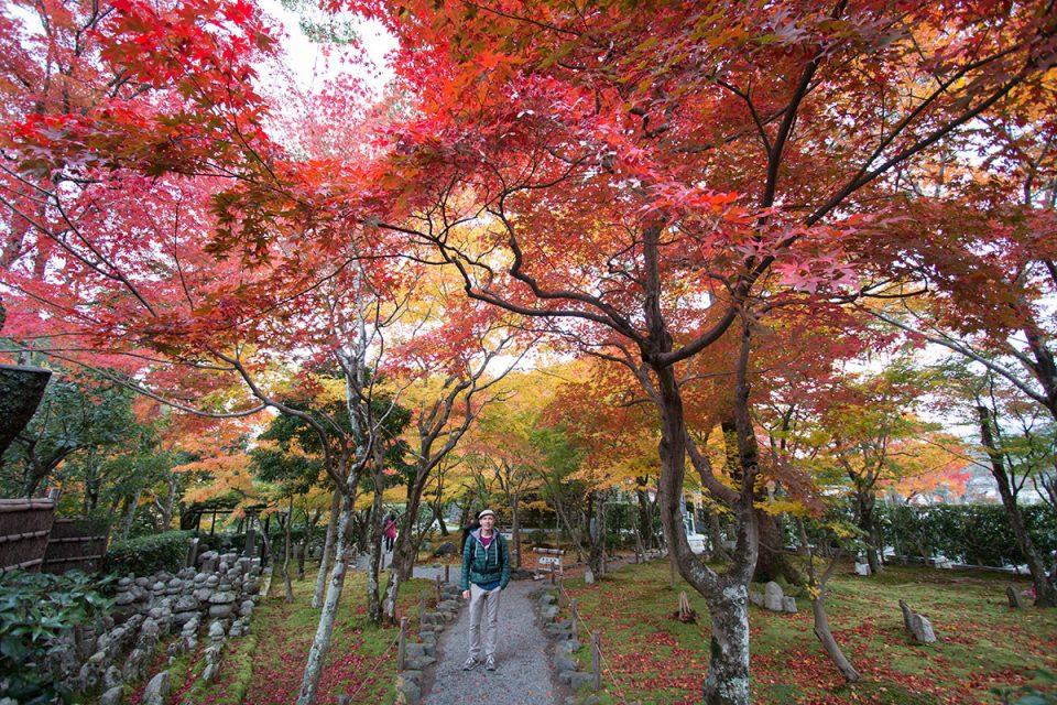 Autumn foliage in Kyoto's Shinnyodo Temple