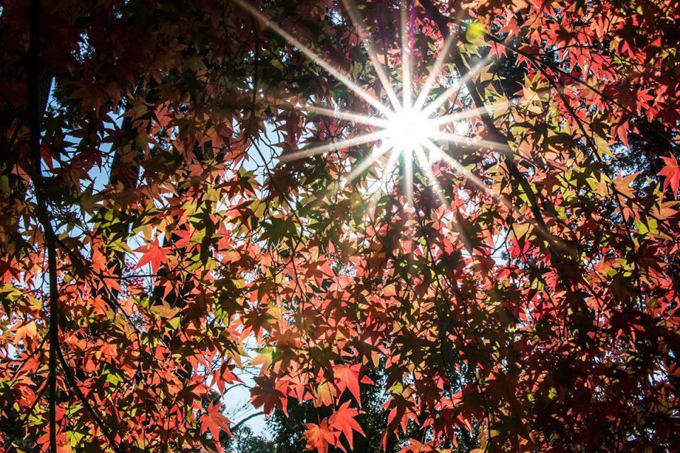 Autumn foliage in Kyoto