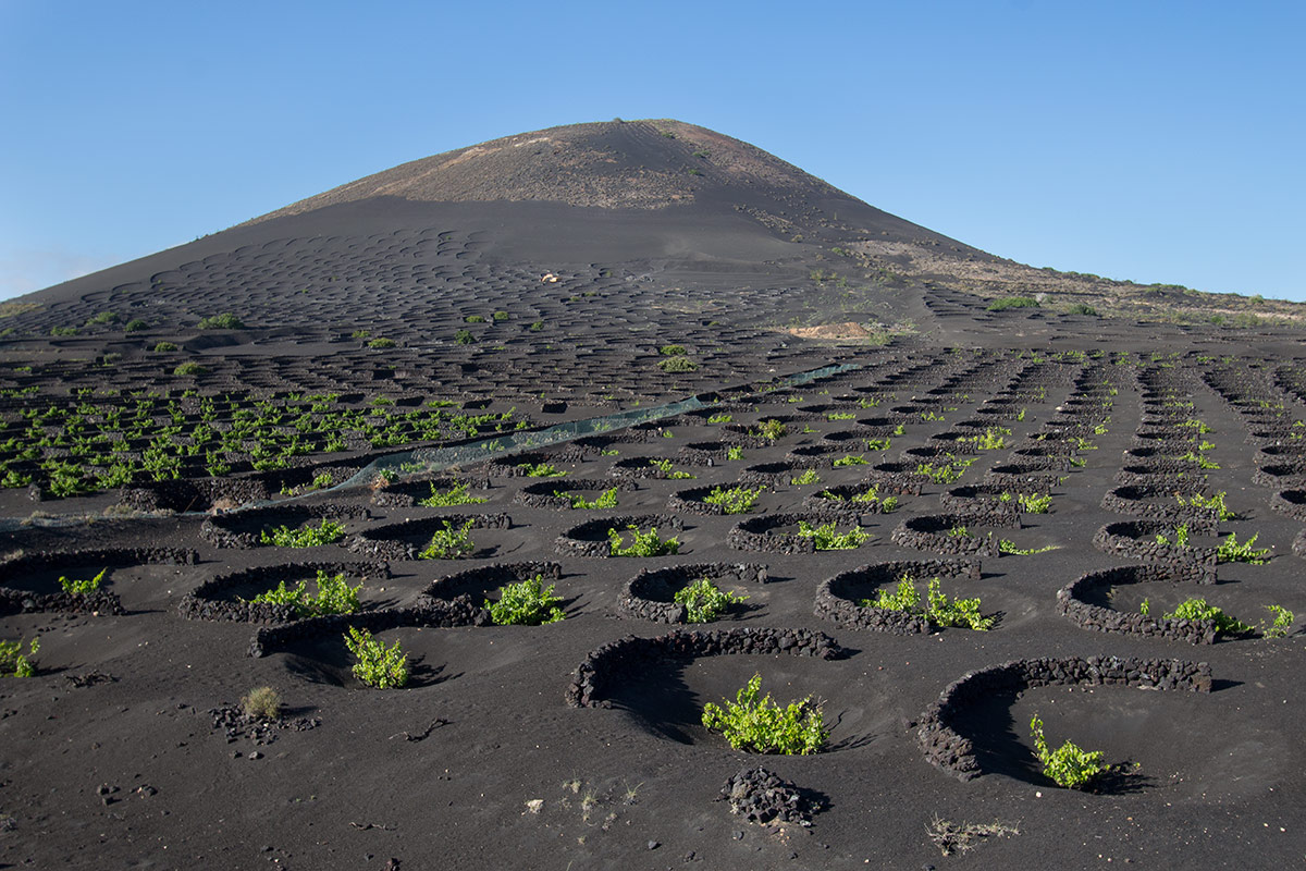 Lanzarote's wine growing region