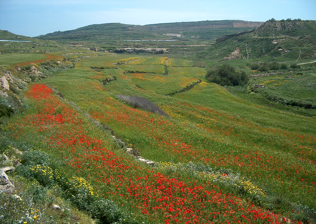Flowers in Gozo