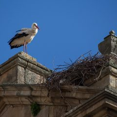 Day trips from Madrid: Storch in Salamanca, Spain
