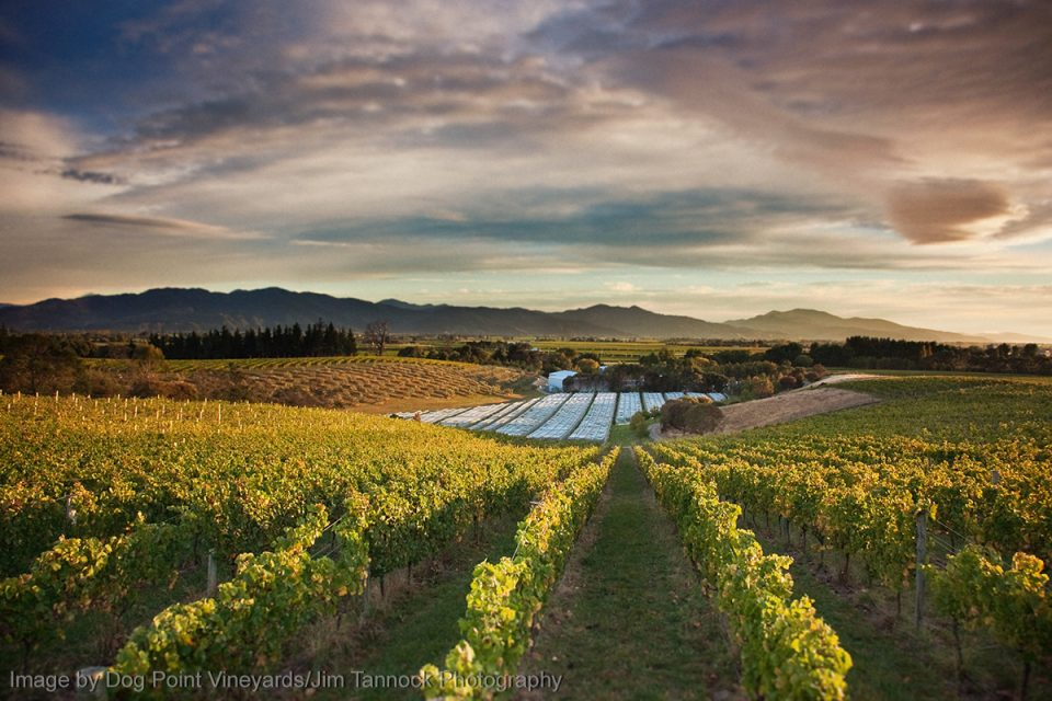 Things to Do in New Zealand: Wine Tasting