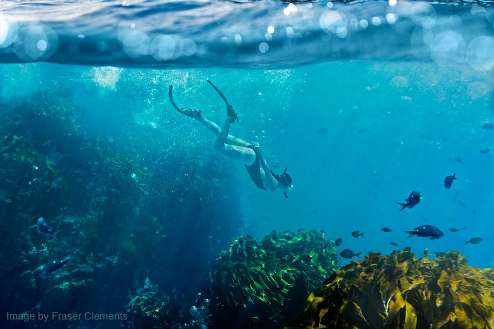 Things to Do in New Zealand: Diving at Poor Knights Islands, Northland