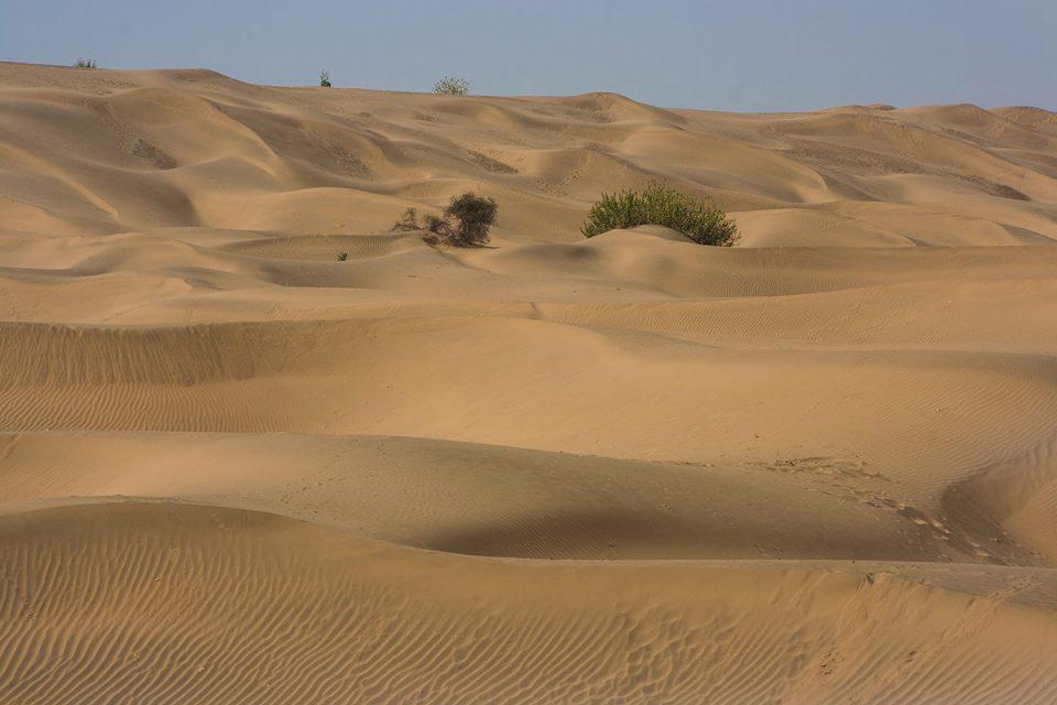 Dunes of Rajasthan's Thar Desert