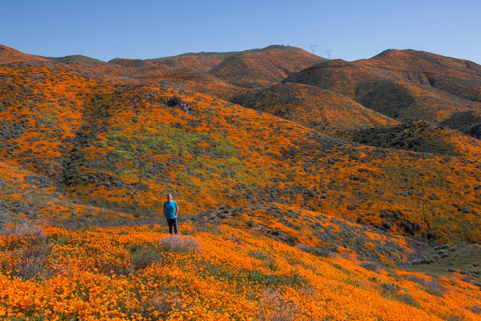 Tony at the Walker Canyon Superbloom