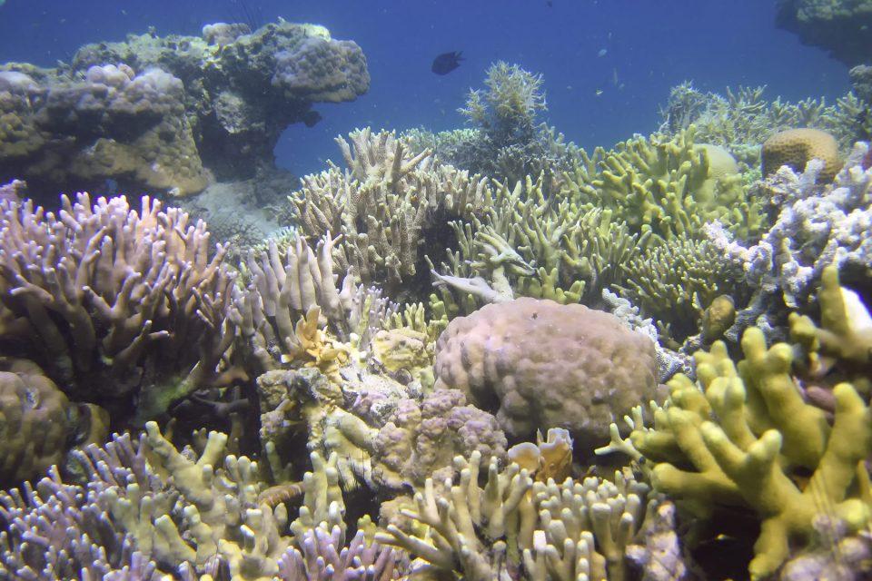Coron Island coral