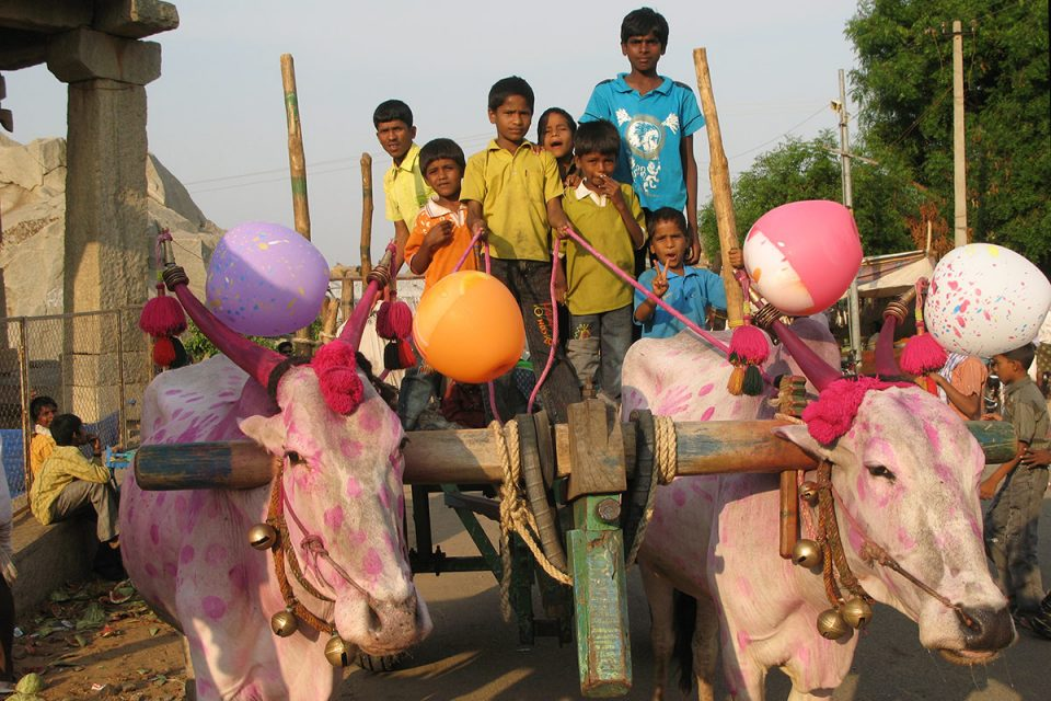 Bulls decorated for Chariot Festival in Hampi