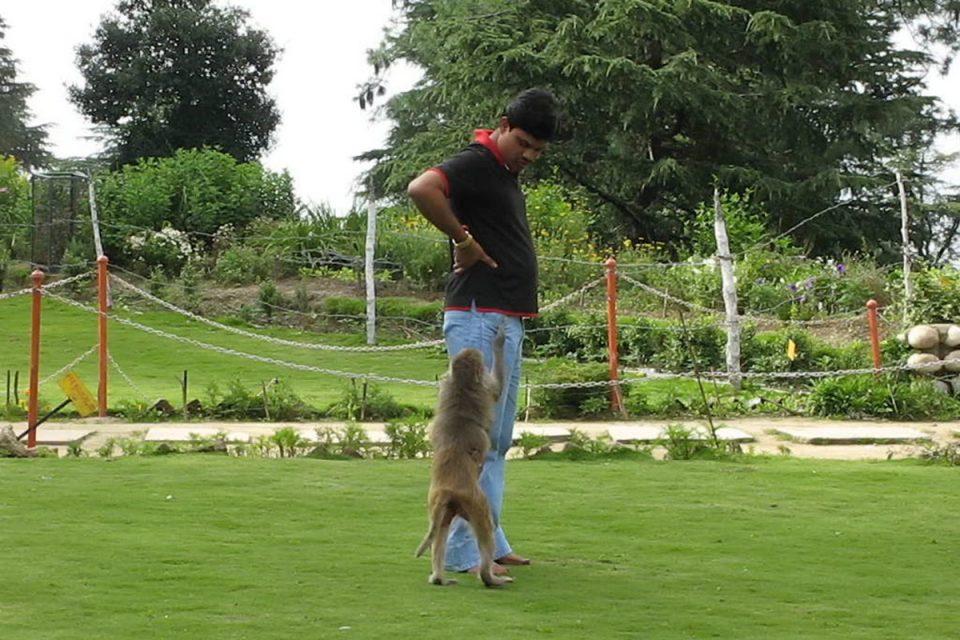 Pickpocketing monkeys in Shimla